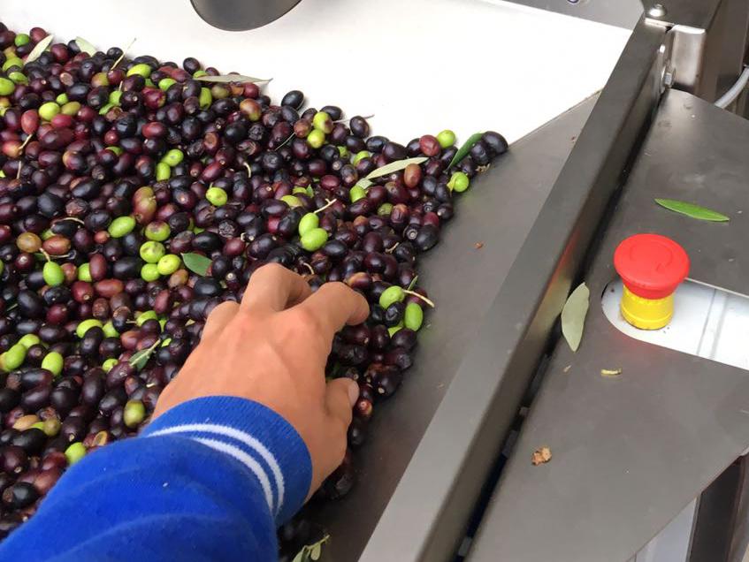 produzione olio
